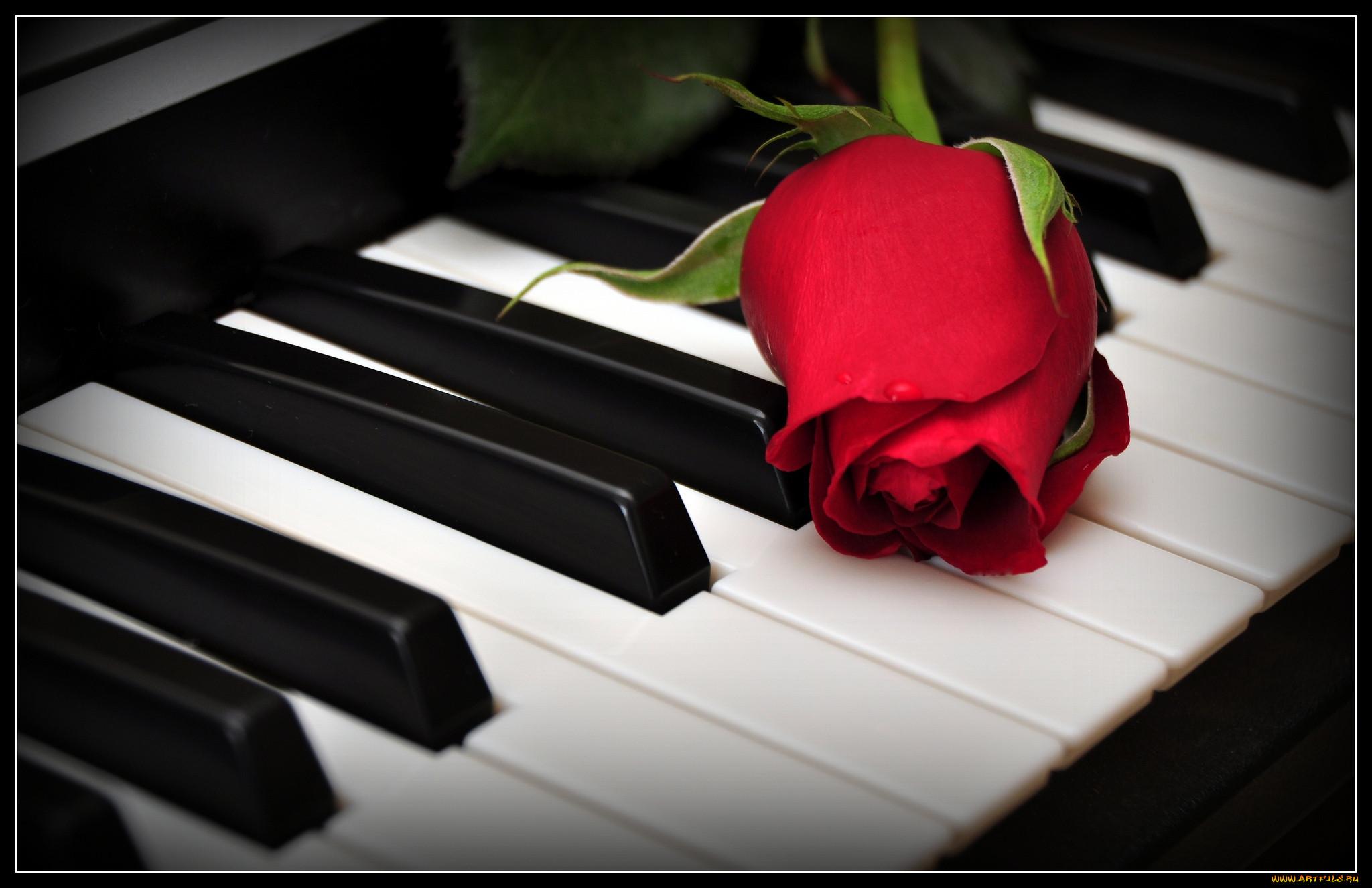 Картинки цветы на рояле 4
